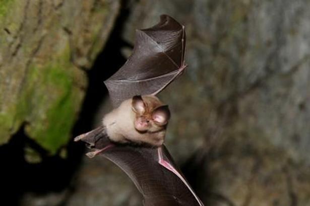 bat-and-owl-walk
